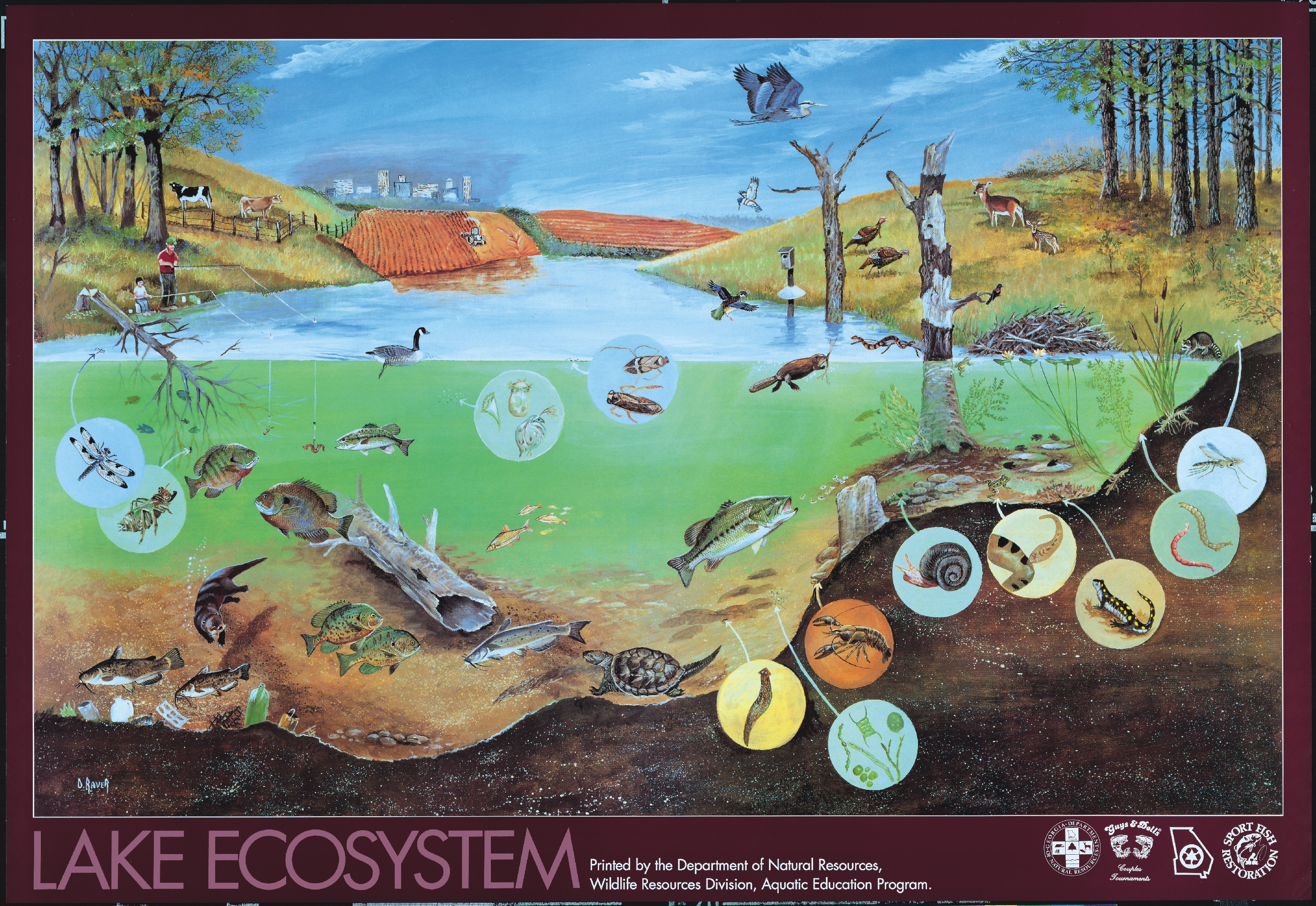 Qdailyscience ecosystem for Living things found in soil